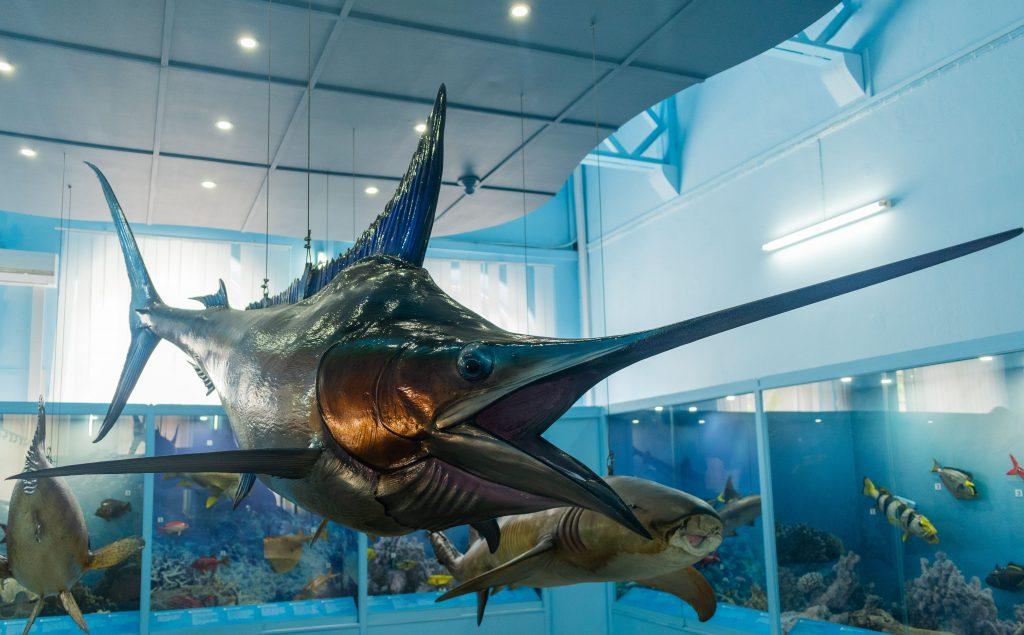 Poisson - Musée de l'histoire naturel.jpg