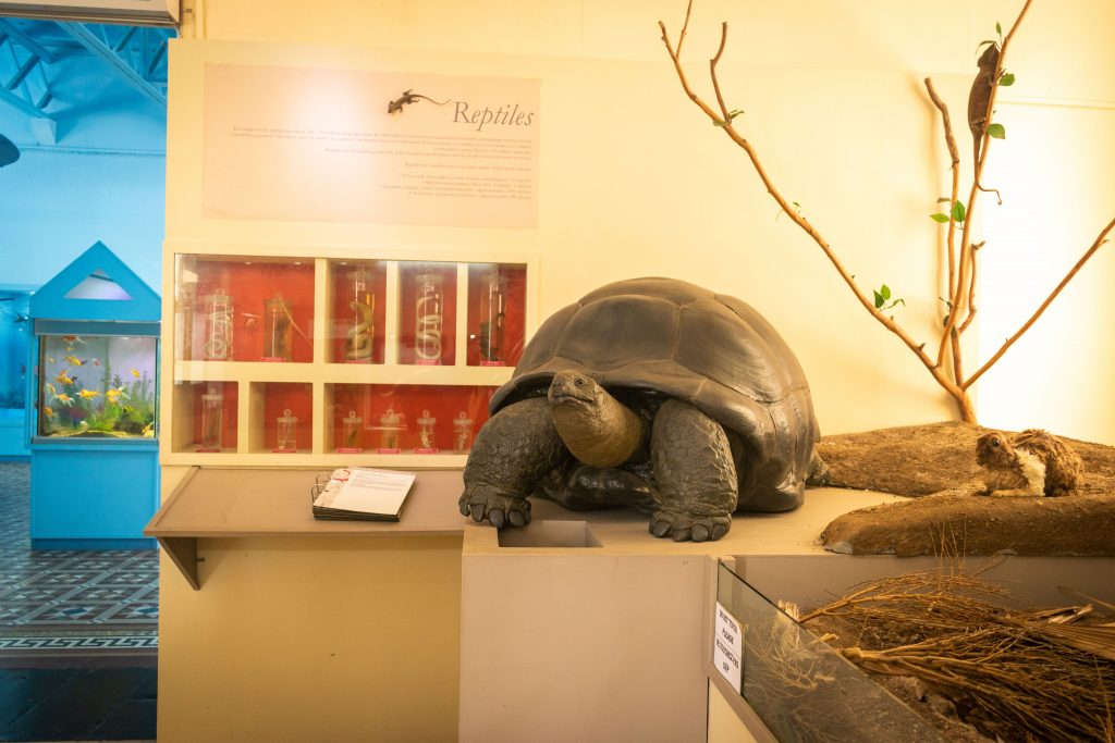 Tortue - Musée de l'histoire naturel.jpg