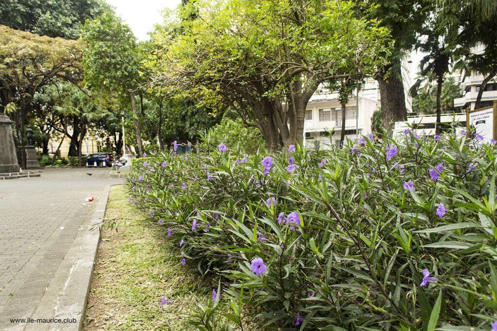 Jardin de la compagnie à Port Louis - fleurs 2