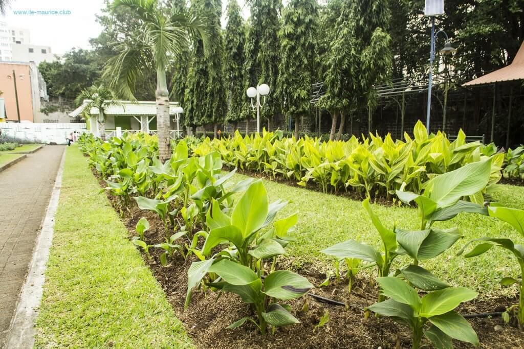 Jardin de la compagnie à Port Louis - fleurs 3