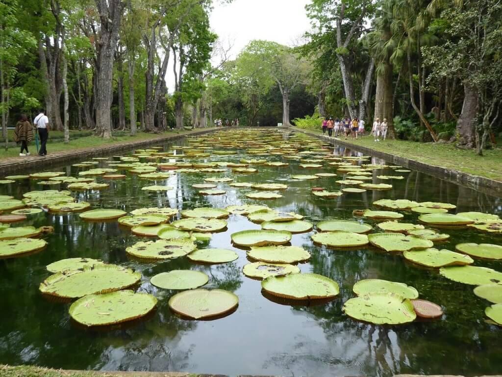 Jardin de pamplemousses - bassin - ile maurice