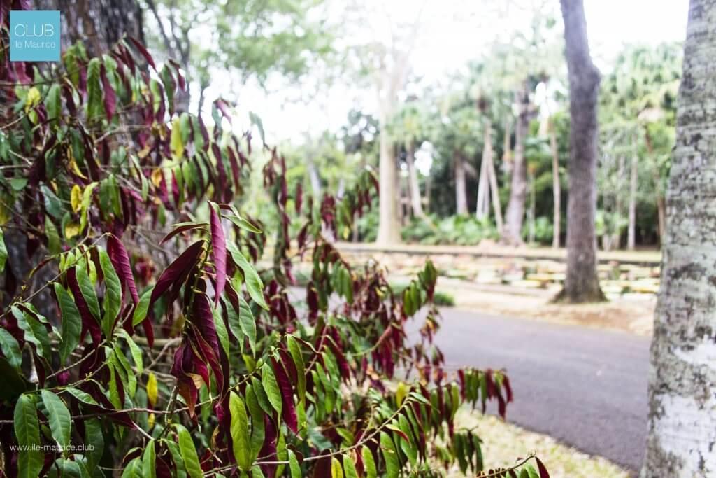 Plantes du jardin de Pamplemousses