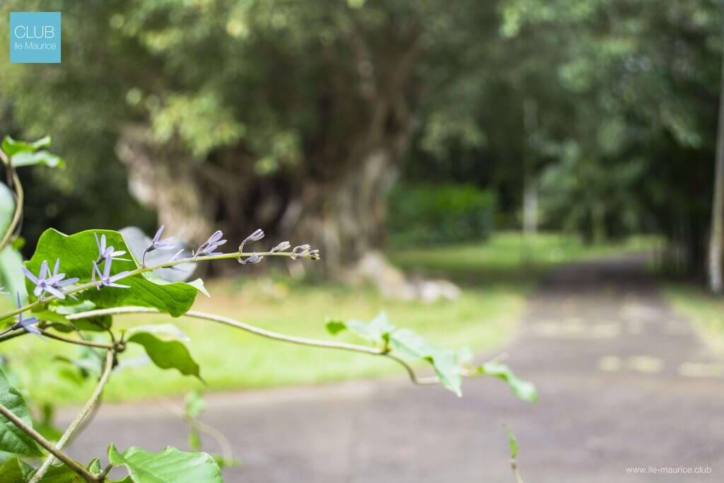Photo du jardin de pamplemousses - plantes