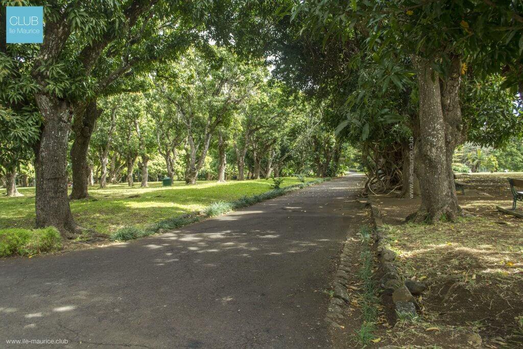 Photo Photo du jardin de pamplemousses - plantes 6